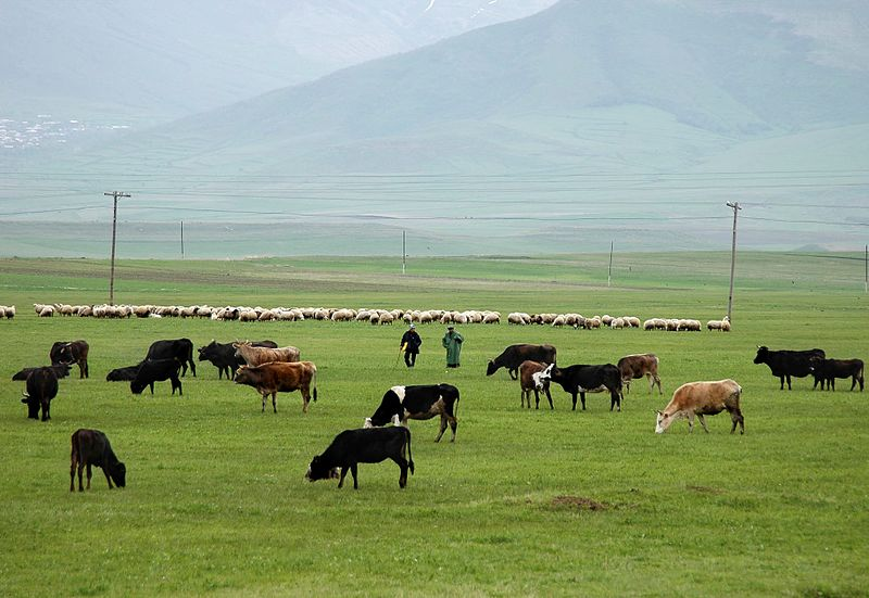 800px-livestock_grazing_in_armenia