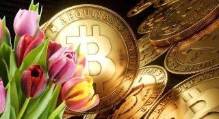 JPMorgan CEO'su: Bitcoin Lale Çılgınlığı'ndan bile daha kötü