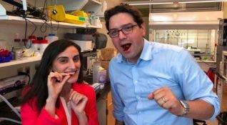 MIT'den Canan Dağdeviren ve ekibi geliştirdiği sindirilebilir sensörlerle bir ilki başardı
