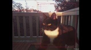 Kedisinin eve girebilmesi için yüz tanıma aracı geliştiren mühendis