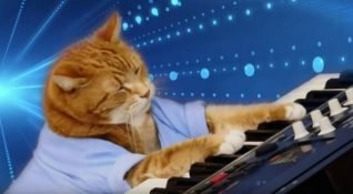 """YouTube fenomeni """"Keyboard Cat"""" Bento hayatını kaybetti"""