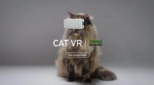 Evde sıkılan kediler için sanal gerçeklik gözlüğü tasarlandı