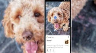 Google Lens artık Google Play'da bağımsız bir uygulama